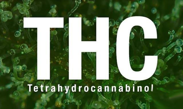 tetrahydrocannabinol thc Tetrahydrocannabinol (thc), has a clearance half-life of less than 30 minutes and is not.