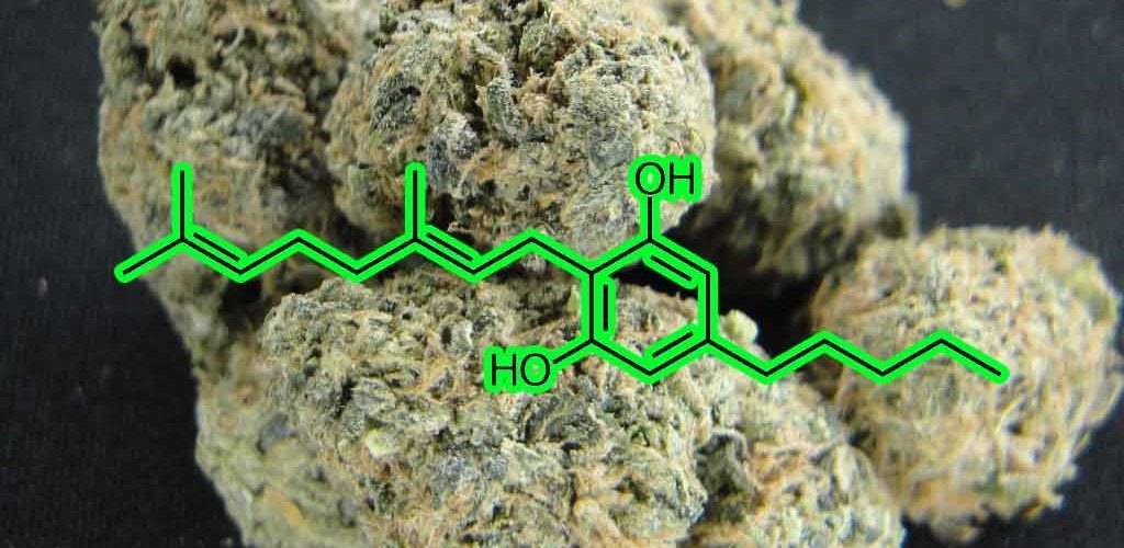 CBG Cannabis