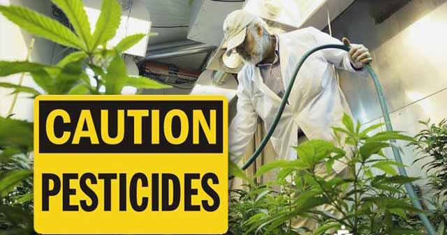 Pesticides in pot